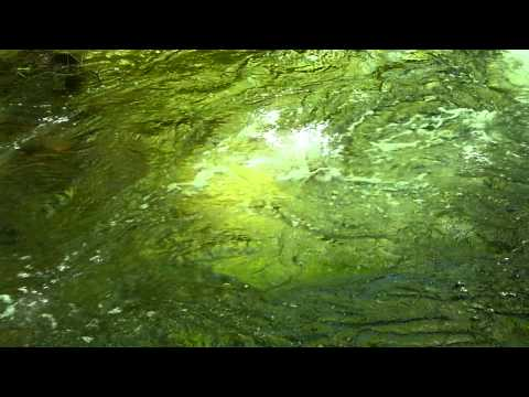 sunlight-water