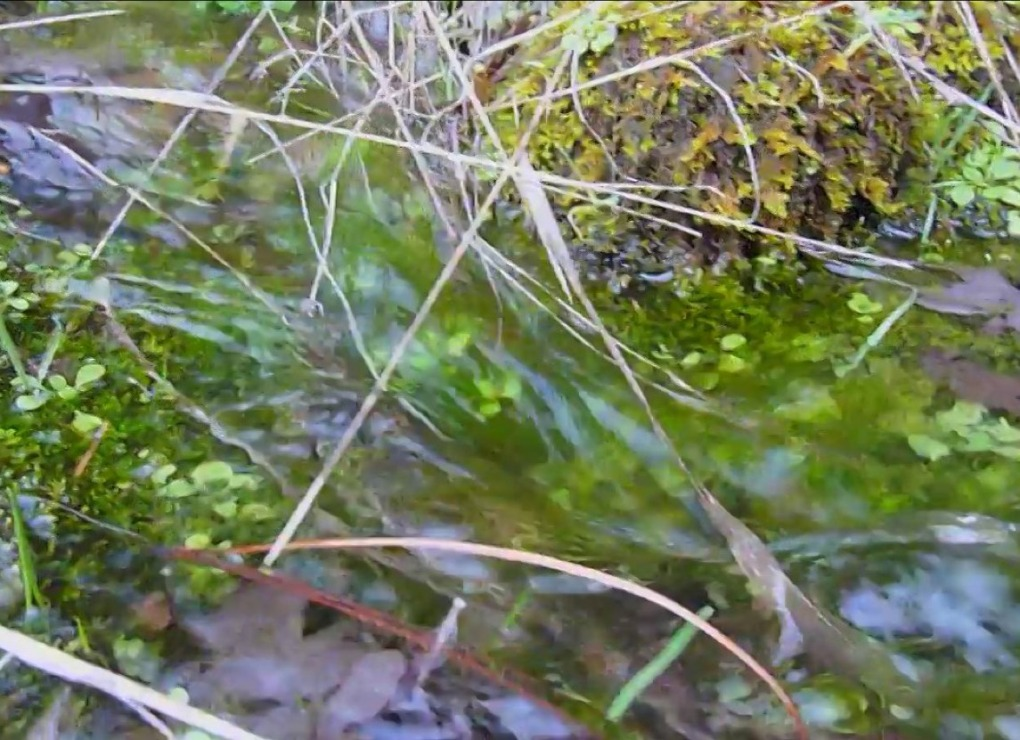 Close To The Water Flowing Down from greeley wells on Vimeo